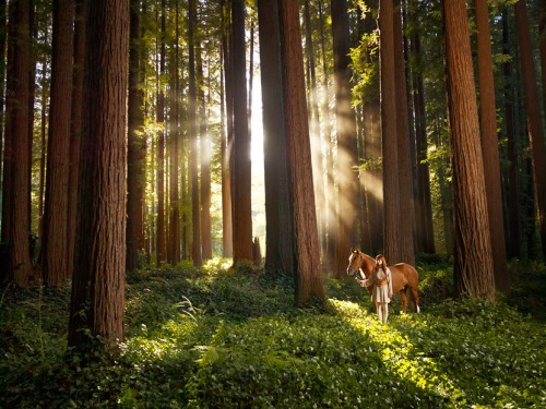 redwood_forest__girl_and_horse_by_mariegoff