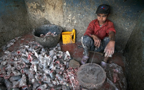 pb-120207-pakistan-child-labor-01.jpg