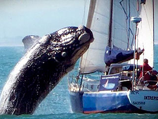 killer-whale-320
